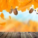 Autumn Background met Gele Eiken Bladeren, Eikels stock afbeeldingen
