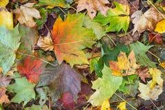 Autumn background Multi coloured leaves Stock Photos