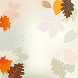 Autumn background with multicolored leaves Royalty Free Stock Photography