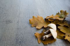 Autumn background with mushrooms and leaves stock image