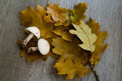 Autumn background with mushrooms and leaves royalty free stock image