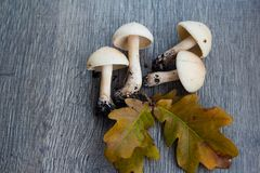 Autumn background with mushrooms and leaves royalty free stock photo
