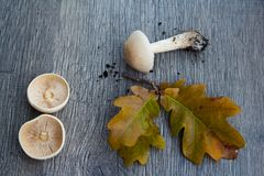 Autumn background with mushrooms and leaves stock images