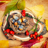 Autumn Background with Natural Elements Stock Photo