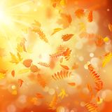 Autumn background with natural leaves and bright sunlight. EPS 10 stock illustration