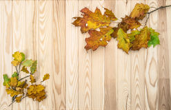 Autumn background with oak and maple leaves Royalty Free Stock Photo