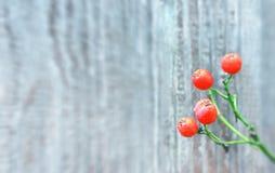 Autumn Background With Orange Berries fotografía de archivo