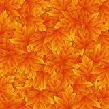 Autumn  background with orange leafs Stock Image