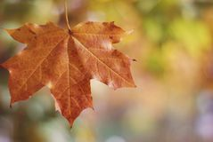 Autumn Background Orange leave on blurred background with free copyspace Royalty Free Stock Image