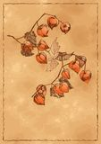 Autumn background with orange physalis Royalty Free Stock Photography