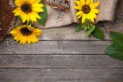 Autumn Background på trä fotografering för bildbyråer