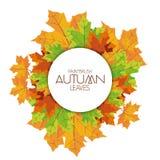 Autumn Background Pattern Template abstracto Fotos de archivo libres de regalías