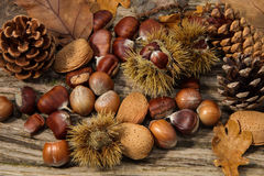 Autumn  Background. With Pine Cones, Hazel Nuts,  Almonds , leaves and cones on a driftwood background Stock Photo