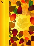 Autumn Background portrait with copy space panel Royalty Free Stock Photography
