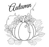 Autumn background with pumpkin and leaves for coloring book vect Royalty Free Stock Image