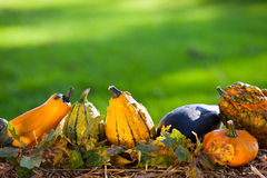 Autumn background with pumpkins Stock Photography