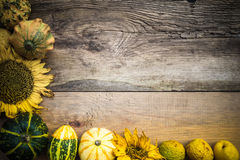 Autumn background pumpkins board Royalty Free Stock Photo