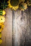 Autumn background pumpkins board Stock Photos