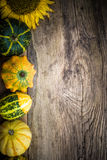 Autumn background pumpkins board Royalty Free Stock Image