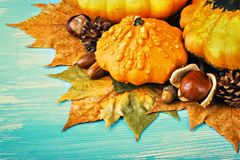 Autumn background with pumpkins Stock Images
