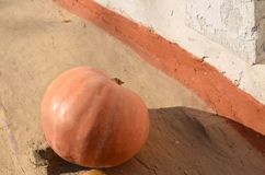 Autumn background with pumpkins on white rustic background, cracked clay. royalty free stock photos