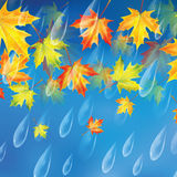 Autumn background. Background with rain drops and maple leaves.Transparent drops of rain on a blue background Royalty Free Stock Photos