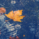 Autumn background. Rainy road with maple leaf. Royalty Free Stock Photography