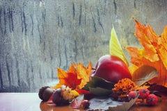 Autumn background, rainy window, colorful leaves Stock Photos