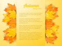 Autumn background with realistic maple leaves Stock Image