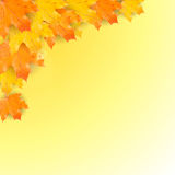 Autumn background with realistic maple leaves Stock Images