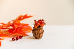 Hawthorn in vase and red maple leaves fall concept Royalty Free Stock Images