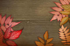 Autumn background. Red autumnal leaves on the dark brown wood background. Composition of leaves Stock Images