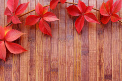 Autumn background of red leaves. Over wooden desk stock photo