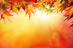 Autumn background with red leaves Royalty Free Stock Photo