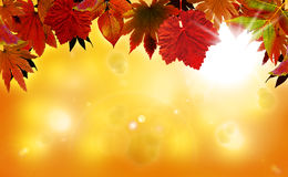 Autumn background with red leaves. And sunshine Stock Photo