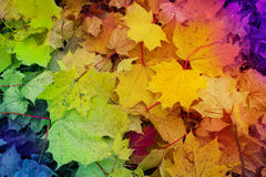 Autumn background - red leaves yellow leaves, green leaves Royalty Free Stock Photo