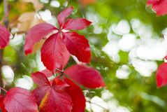 Autumn background Royalty Free Stock Photos