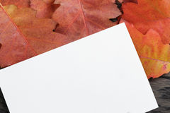 Autumn background with red oak leaves on stained oak table Stock Photo