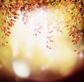 Autumn background with red orange hanging foliage branch on sunset light background with bokeh Royalty Free Stock Photos