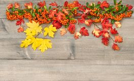 Autumn background Red yellow leaves wooden texture. Autumn background. Red and yellow leaves on rustic wooden texture royalty free stock images