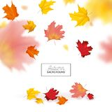 Autumn Background with Red and Yellow Maple Leaves. Nature Fall Seasonal Design Template for Web Banner, Leaflet, Sale. Poster. Vector illustration royalty free illustration