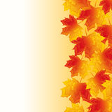 Autumn background with red and yellow maple leaves Royalty Free Stock Photography