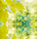 Autumn background reflected in a water Stock Photos