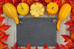 Autumn background with a retro chalkboard with gourds and fall l royalty free stock photos