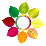 Autumn background with round frame and leaves Stock Images