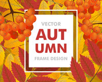 Autumn background with rowan, berries and leaves. Frame fall. Ve. Ctor illustration Stock Photo
