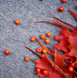 Autumn background , Rowan and leaves Stock Images