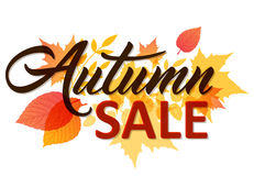 Autumn background for sale Stock Photo