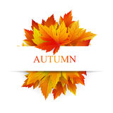 Autumn background for sample text Royalty Free Stock Photo