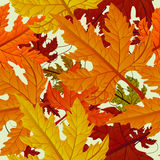 Autumn background, seamless tile with maple leaves Royalty Free Stock Photo